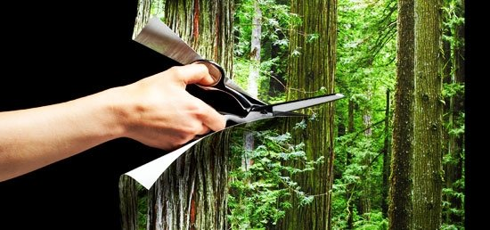 The Paperless Trail